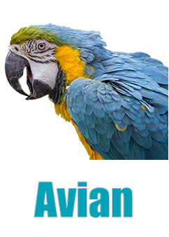 Avian bird food buy online
